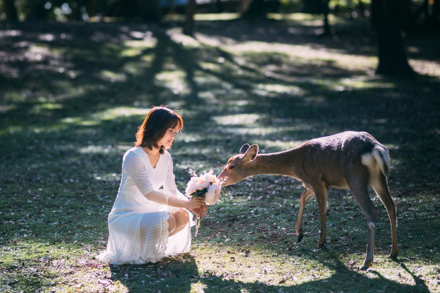 Japan Kyoto Outdoor Pre-Wedding Photoshoot At Nara Deer Park  by Jia Xin  on OneThreeOneFour 5