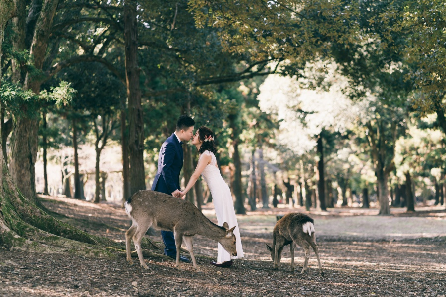 Japan Pre-Wedding Photoshoot At Nara Deer Park  by Jia Xin  on OneThreeOneFour 6